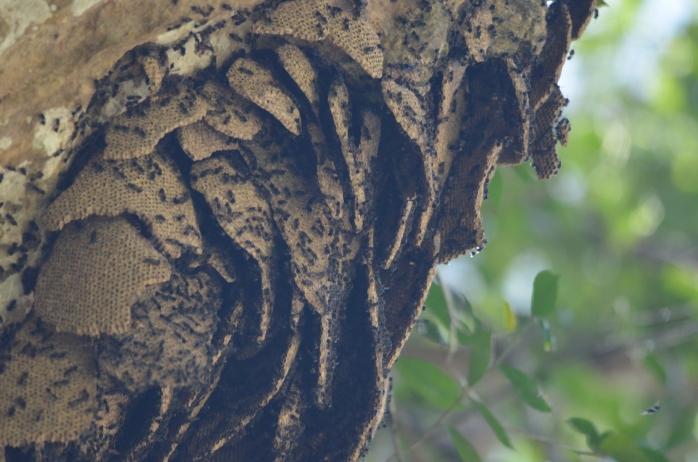 Order Hymenoptera (Ants, Bees, Wasps and Sawflies) (Surat Thani, Thailand)