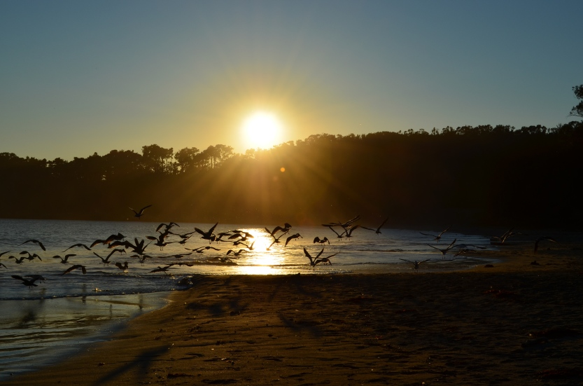 Birds in flight (San Simeon, California, USA)