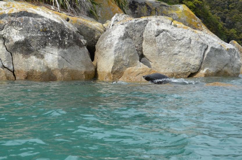 Watching the antics of New Zealand fur seals