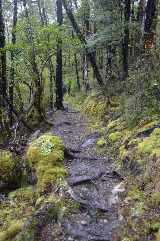 Lakehead Track