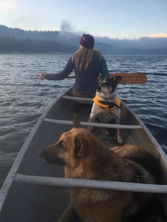 Balancing act...waves and dogs