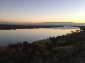 Guadalupe Slough