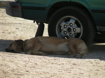 Tank hiding in the shade in the Mojave