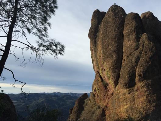 Condor overlooking the valley