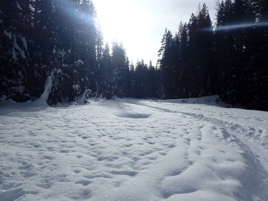 Snow conditions on Meadow Trail
