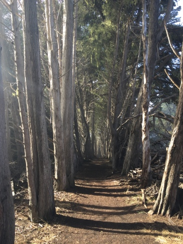 Trail between the Monterey cypress