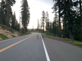 Open Road from Bunny Flat to Old Ski Bowl