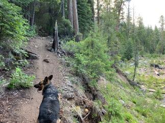 Roxie on the Sisson-Callahan Trail
