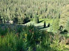 Deadfall Meadow