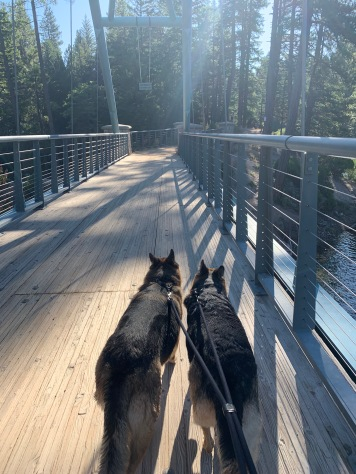 Dogs on the bridge