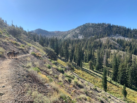 PCT above Deadfall Meadows